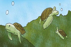 dadaji and turtles