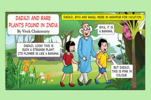 dadai-and-rare-plants-in-indiacover